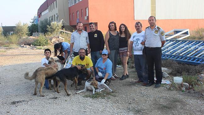Seyhan Belediyesinden Sokak Hayvanlarına Destek