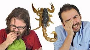 Böcek Yeme Kapışması