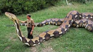 En Büyük Yılan en büyük hayvan