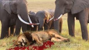 Hayvanların yaşama mücadelesi