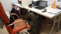 Japon deprem uzmanı: 'Masa altında saklanmak riskli'