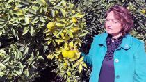 Adana, tarım desteklerinde yok sayılıyor!
