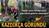Rögara Düşen Dana, Köpeğin Başında Havlamasıyla Fark Edilip Kurtarıldı