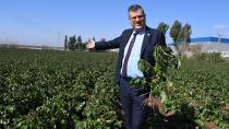 Adana'da Patatesi Don Vurdu!