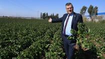 Barut, 'Patates üreticilerine darbe vuruluyor'