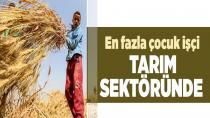 En fazla çocuk işçi tarım sektöründe!