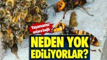 Böcekler neden yok ediliyorlar?