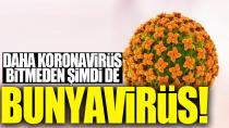 Koronavirüsten sonra şimdi de Bunyavirüs!