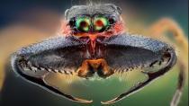 Bu böceği gördüğünüzde arkanıza bakmadan kaçın!