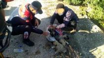 Yavru köpekleri çuvalla dereye atarken yakalandılar