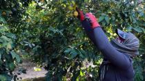 Sokağa çıkma kısıtlamasında tarım işçilerinin hasat sevinci