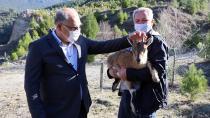 Bitkin Haldeki Yavru Dağ Keçisine Belediye İşçileri Sahip Çıktı