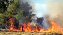 Adana'da anız yangını ormana sıçradı...